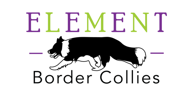 ELEMENT BORDER COLLIES